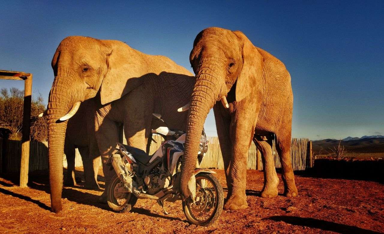 In Afrika haben sie bekanntlich größere Rüssel als wir Europäer.