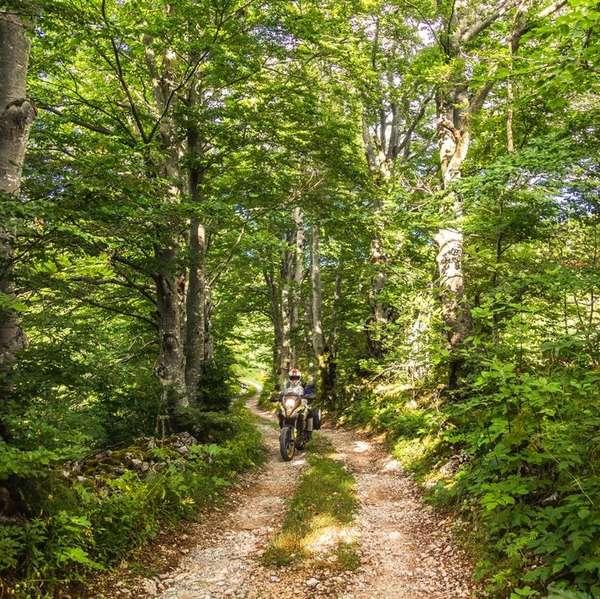 Wer den gpx-track mit Offroad-Anteil wählt, ist gut 20 Kilometer auf Schotterstraßen im Wald unterwegs.